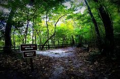 Devil's Millhopper Geological State Park, Gainesville, Florida — by Lost Girls. This is a beautiful geological state park with a 120 foot deep sinkhole. Take the stair case down to the bottom to...