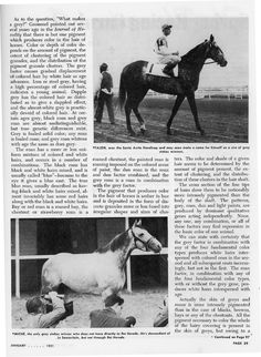 THE THREAD OF GREY ARTICLE pg2 Grey Horses, Thoroughbred, Horse Racing, Grey And White, Pony, Gray Color, History, Heart, Pony Horse