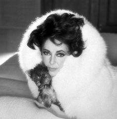 Elizabeth Taylor, a Fur, and a Yorkie. because she's Liz dammit! Hollywood Icons, Old Hollywood Glamour, Hollywood Stars, Classic Hollywood, Hollywood Actresses, Edward Wilding, Elizabeth Taylor Movies, Elizabeth I, Classic Actresses