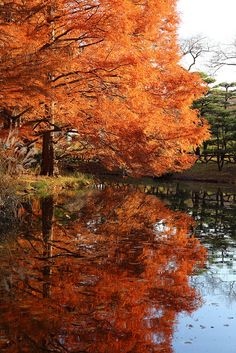Colors of Fall Ѽ Autumn ♥ ༻✿ڿڰۣ ♥ NYrockphotogirl ♥༻Autumn reflection +780 REPINS+