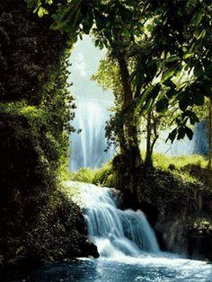 Đắm chìm vào khung cảnh thiên nhiên với cây cối xanh tươi và thác nước mát lành bằng cách tải hình nền động – Thác nước trong rừng nhé bạn!