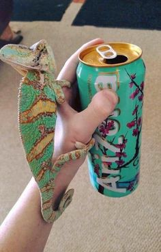 The Funniest Pictures of Today's Internet The 21 Best Funny Pictures Of Today's Interne Cute Baby Animals, Animals And Pets, Funny Animals, Cute Reptiles, Reptiles And Amphibians, Chameleon Pet, Cute Lizard, Animal Classification, Exotic Pets