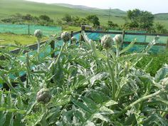 Living the Reasonably Good Life: Perennial veg