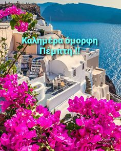 Beautiful Pink Roses, Wonders Of The World, Good Morning, Greece, In This Moment, Mansions, My Favorite Things, House Styles, Image