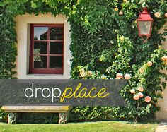6x8 Durable Matte Vinyl Backdrop / Background / Ivy by DropPlace