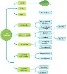 taquiamila: Mapas conceptuales y esquemas sobre las plantas. 5° primaria