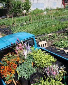 hillenhomesteadBountiful time of year! July Flowers, Flower Farmer, Summer Special, Garden Bridge, Warm Weather, Special Events, Bloom, Outdoor Structures, Instagram Posts