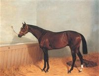 Mackintosh a bay racehorse in a stable by Emil Adam