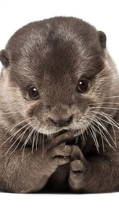 Baby otter                                                       …