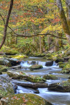 The Tremont area of the Great Smoky Mountains National Park, near Bryson City, NC