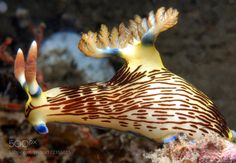 """Nembrotha lineolata Go to http://iBoatCity.com and use code PINTEREST for free shipping on your first order! (Lower 48 USA Only). Sign up for our email newsletter to get your free guide: """"Boat Buyer's Guide for Beginners."""""""