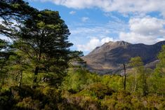 The Great Caledonian Forest once covered much of Scotland, below the high tops; Caledonia - the Roman name for Scotland - means wooded heights. The forest declined over thousands of years, due to both a …