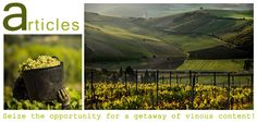 Article-Wine tourism! Wine experience trips in Greece