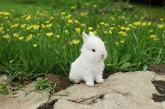 amo a los conejos !!!!