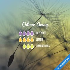 Odour Away - Essential Oil Diffuser Blend