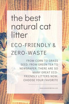 A Complete List of the Most Eco-Friendly Cat Litters - since learning about the health dangers of clay cat litter for both human + cat, and understanding - Clay Cat Litter, Clay Cats, Natural Cat Litter, Green Living Tips, Pet Care Tips, Natural Lifestyle, Healthy Lifestyle, Happy Animals, Sustainability