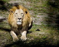 Do not kill them Photo by Alvaro Barrera — National Geographic Your Shot