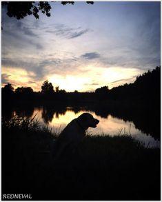 REDNEVAL Celestial, Labradors, Outdoor, Sunsets, Animals, Outdoors, Animaux, Labrador, Animal