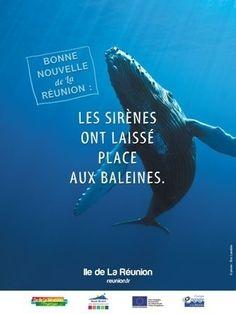 Île de la Réunion - Les sirènes ont laissé place aux baleines