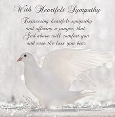 FREE To Share Sympathy Card Messages - Words Of Sympathy Picture Cards - Including Messages Of Condolence and Deepest Sympathy Cards