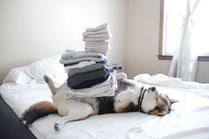 Shiba no maru blog: laundry