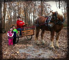 Another beautiful Fall day, family, and King - God is good! This is my project horse, a Belgian. This was our 6th drive. <3