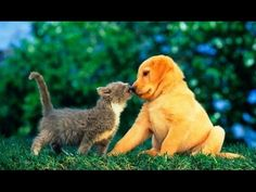 Funny Cats vs Dogs – Funny Animals 2018 - Pet News Cute Kittens, Kittens And Puppies, Cute Cats And Dogs, Baby Puppies, Cool Pets, Cute Puppies, Funny Dog Videos, Funny Dogs, Funny Animals