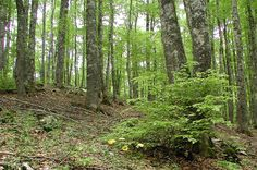 american forest - Google Search
