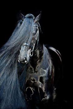incomodidad del caballo lago mi