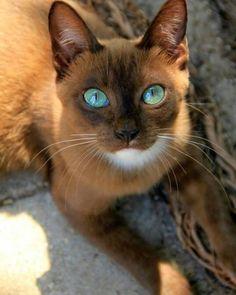 Когда животные красивее и умнее, чем ты-27 фото-
