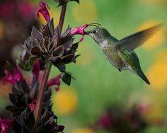 Make a Hummingbird Garden: Is your backyard hummingbird-friendly?