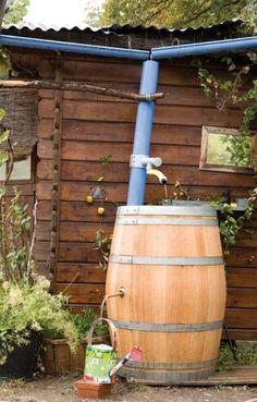 Idée récup' au jardin : le tonneau en chêne récupérateur d'eau