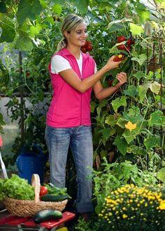 Nutzgarten: Die besten Gartentipps im August - Gurken, Kartoffeln etc