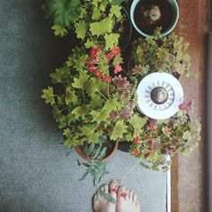 The best starter houseplants, and how to care for them