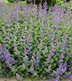 If you are looking for low maintenance flowering plants that will grow well in full sun (even in the South!), this list of full sun perennials will help.