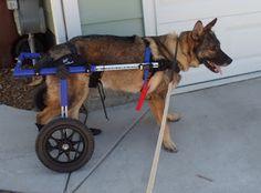MWD Emir, Military service dog, did 4 tours in Iraq
