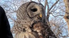 The Eastern Shore of Maryland has a high owl content. This is an interesting article on how owls swivel their heads.