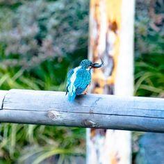 もぐもぐぱくぱく  #カワセミ#翡翠#kingfisher #鳥#bird#野鳥#Wildbird#birdwatching #小鳥#pocket_birds #動物#animal #かわいい#kawaii#cute #風景#自然#景色#picture#landscape#nature #日本#japan#love#loves_nippon #写真好きな人と繋がりたい #一眼レフ