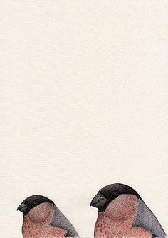 Pyrrhula pyrrhula x2 (2016) Pen & Watercolour with gloss finish 210mm x 297mm by Anna Vialle Print £30.00