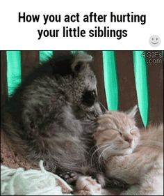 How you act after hurting your little siblings / iFunny :)