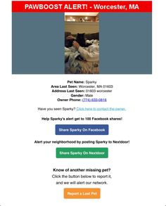 Lost Male Cat Named Sparky: Worcester, MA Cat Names, Have You Seen, Worcester, Lost & Found, The Neighbourhood, Pets, The Neighborhood, Animals And Pets