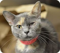 URGENT!! ACCT PHILLY: Philadelphia, PA - Domestic Shorthair. Meet Carlie, a kitten for adoption.  Domestic Shorthair Color: Calico Or Dilute Calico Age: Kitten Sex: Female ID#: 23488993 Hair: Short  Act quickly to adopt Carlie. Pets at this Shelter may be held for only a short time. http://www.adoptapet.com/pet/11430801-philadelphia-pennsylvania-kitten