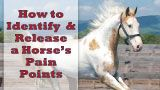 click her to learn more on how to keep your horse healthy