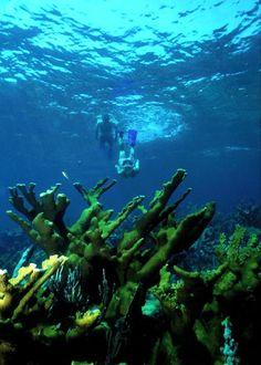Snorkeler dives down on Elkhorn Reef. Biscayne National Park, Miami American National Parks, National Parks Usa, Marine National Park, National Forest, Florida Sunshine, Sunshine State, Biscayne National Park, Marine Reserves, Mangrove Forest