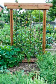 Vegetable garden trellis idea