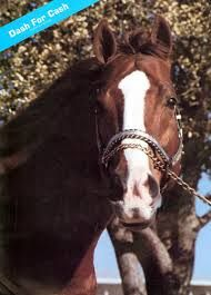 Dash For Cash: won 21 by 24 races, his foals earned more than 34,3 million dollars in races!
