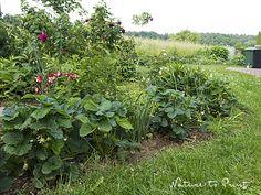 Und ist der Garten noch so klein, Erdbeeren müssen sein. Doch wohin mit den süßen Früchtchen, wenn im Garten kein Platz mehr für ein richtiges Erdbeerbeet ist?