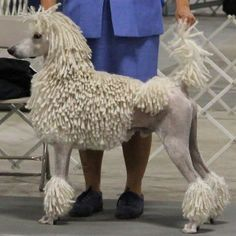 Corded Poodle                                                                                                                                                                                 More