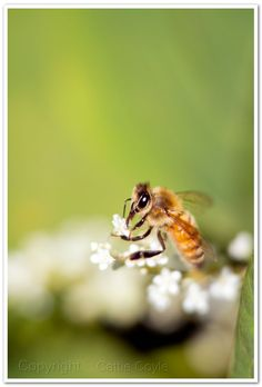 Honeybee.  Spring almost here. I'm ready.