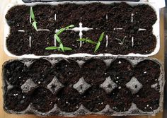 Recycle your egg cartons to raise seeds. When they've got their first 2 true leaves, cut the cells apart and plant straight into your pot or garden. The cardboard will decompose with no damage to delicate seedling roots.   The Micro Gardener